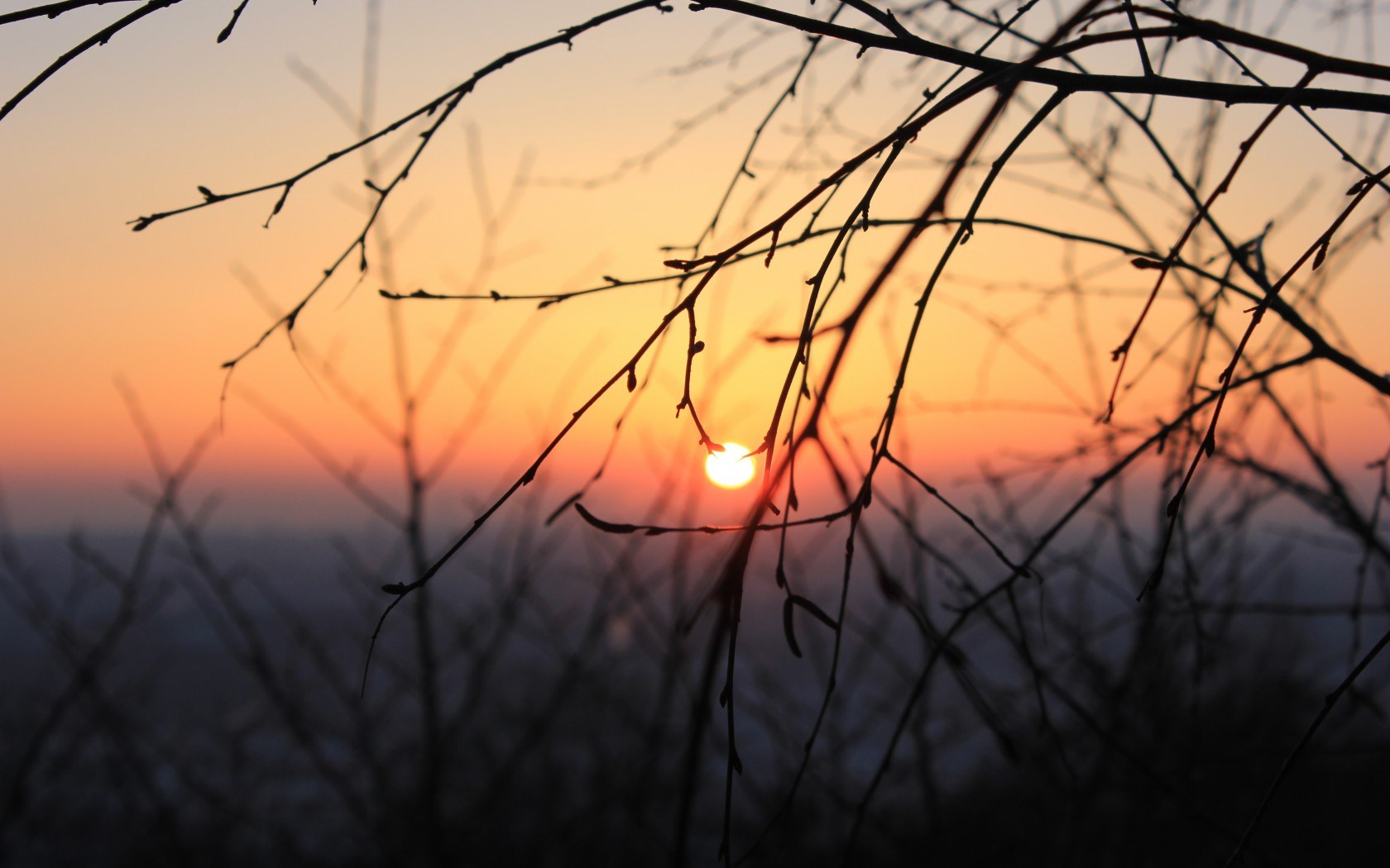 Sunset Branches Trees Nature