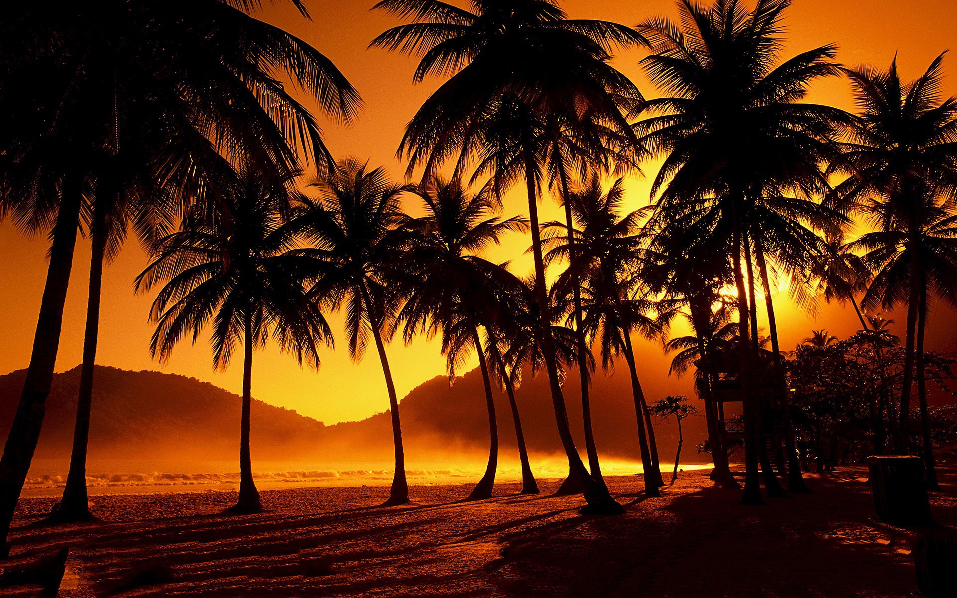 Sunset Palms Beach Wallpaper 1920x1200 32114