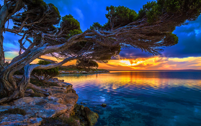 Sunset park lake tree