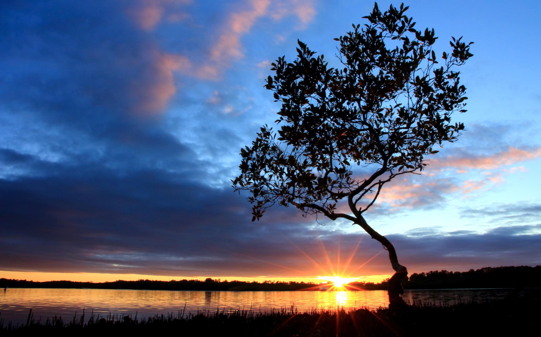 Sunset pelican island australia