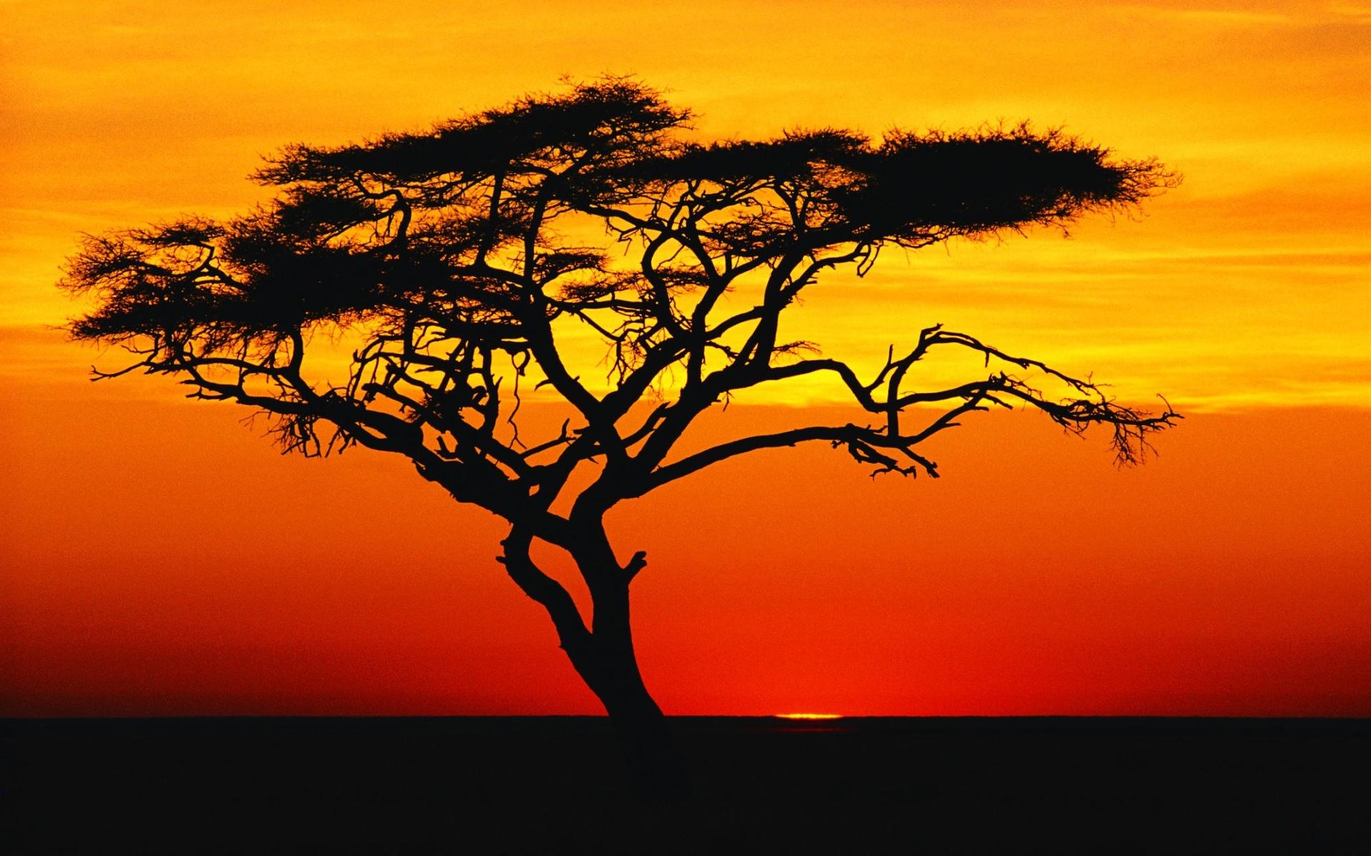 Sunset plant silhouette