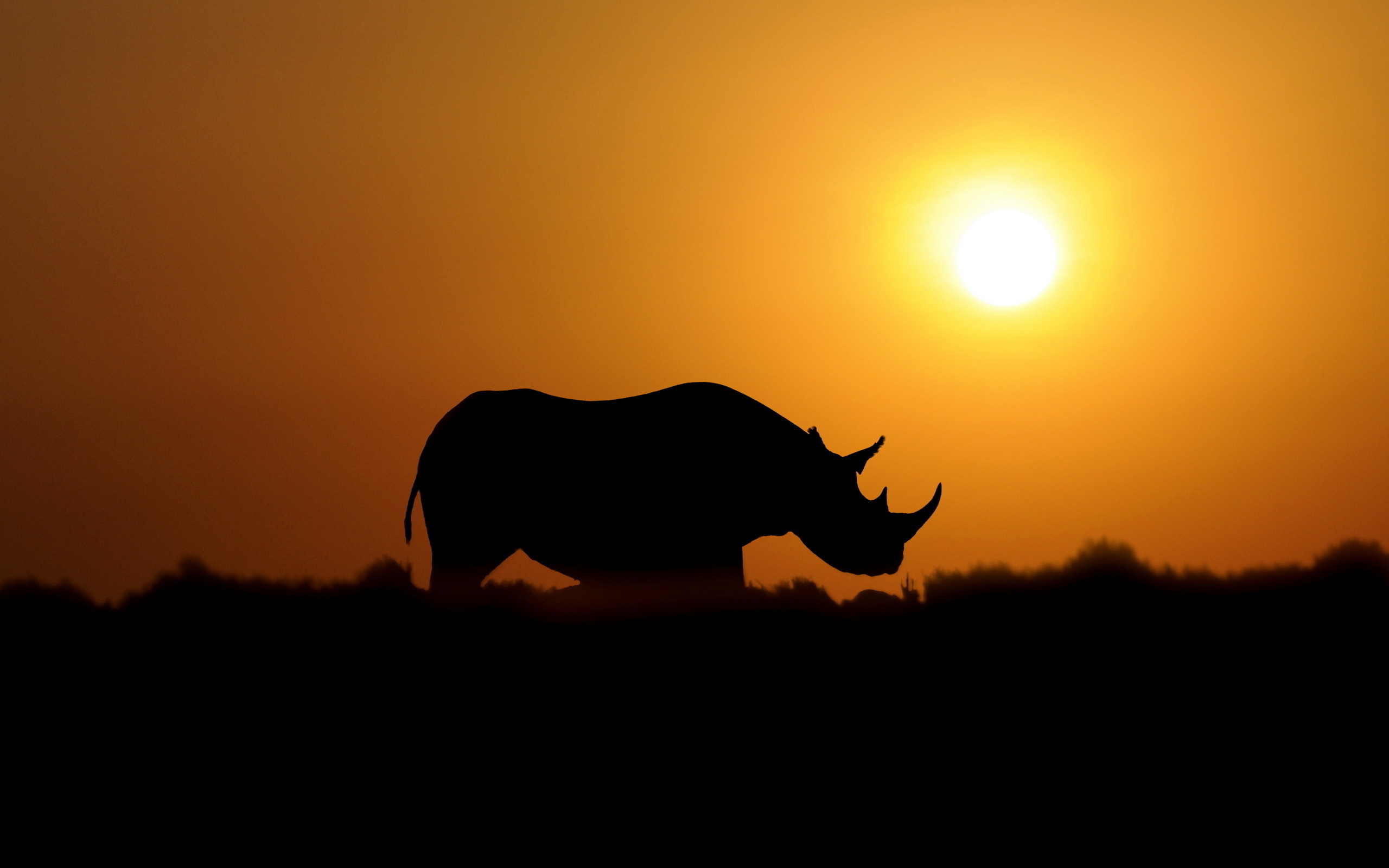 Sunset rhino