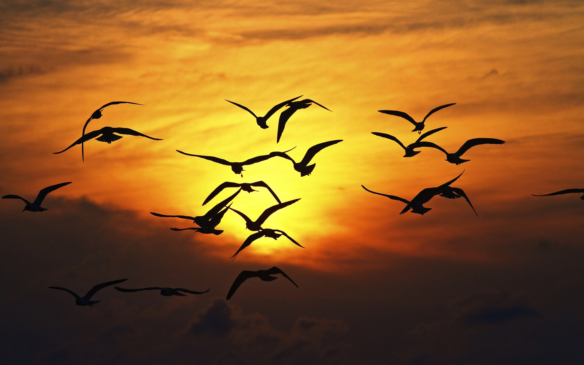 Sunset Sky Birds