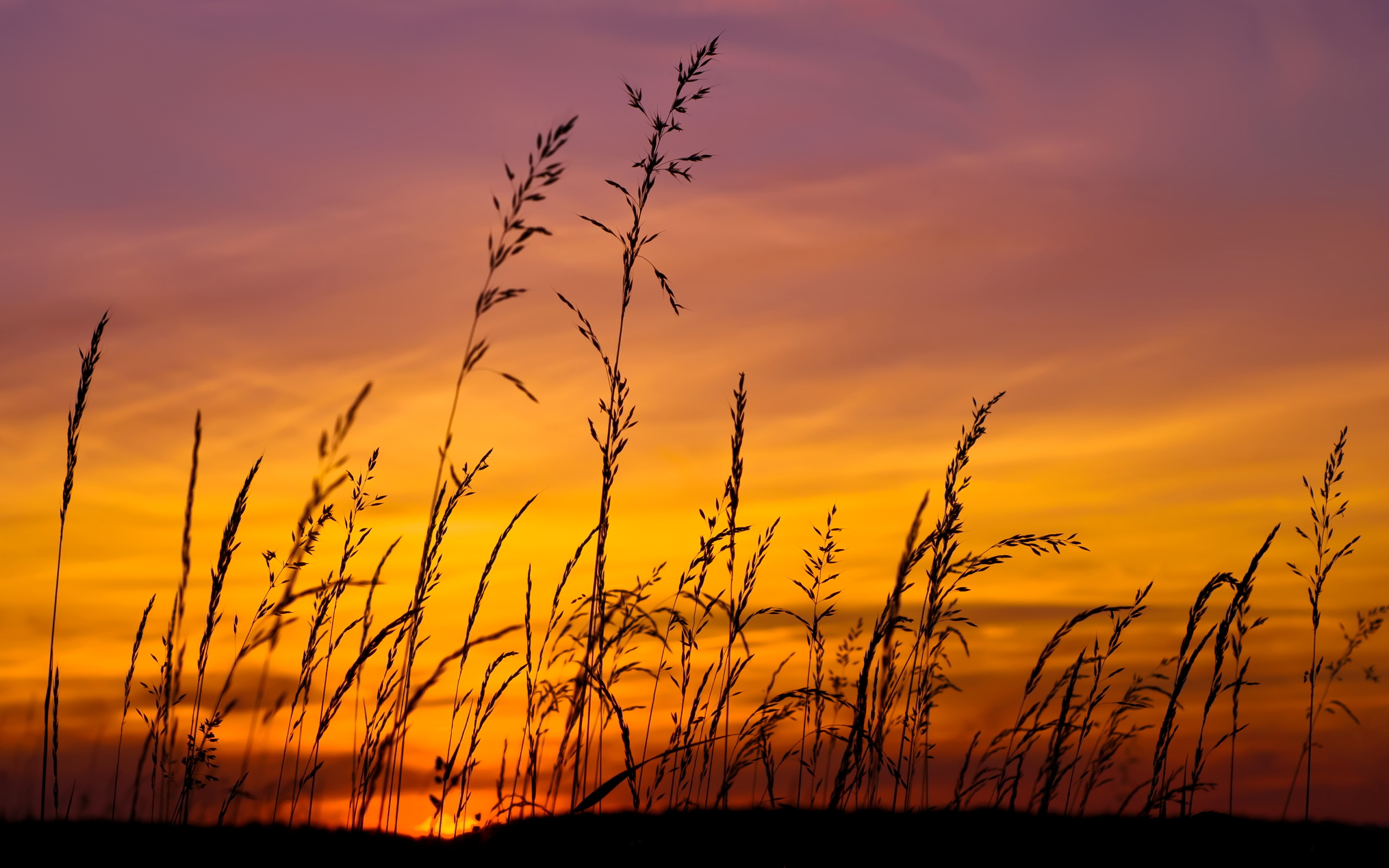 Sunset sky grass