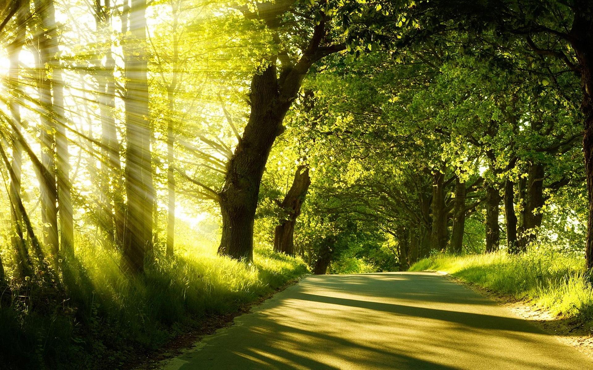 Description: The Wallpaper above is Summer Forest Sunshine Wallpaper in Resolution 1920x1200. Choose your Resolution and Download Summer Forest Sunshine ...