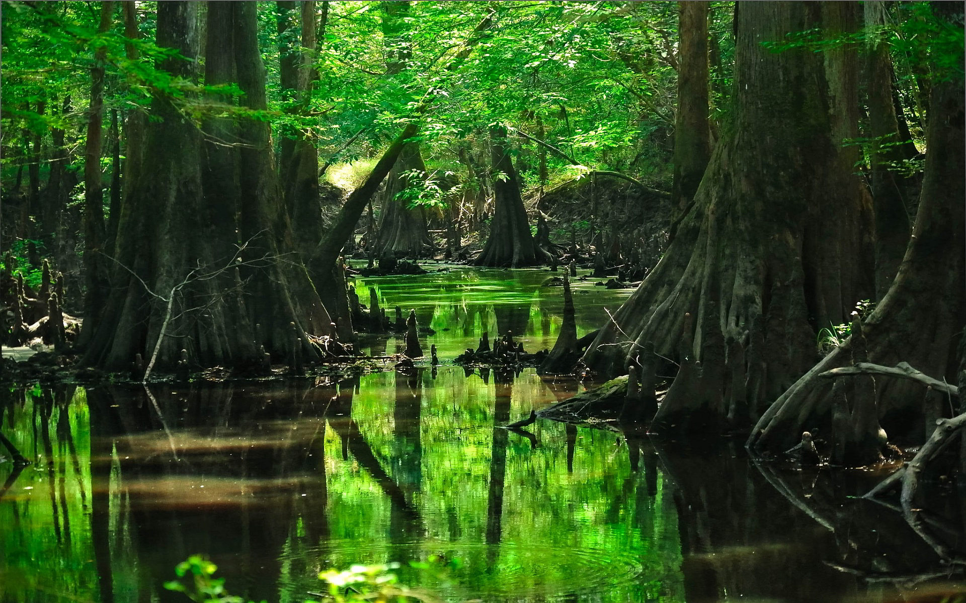 Forest tree swamp