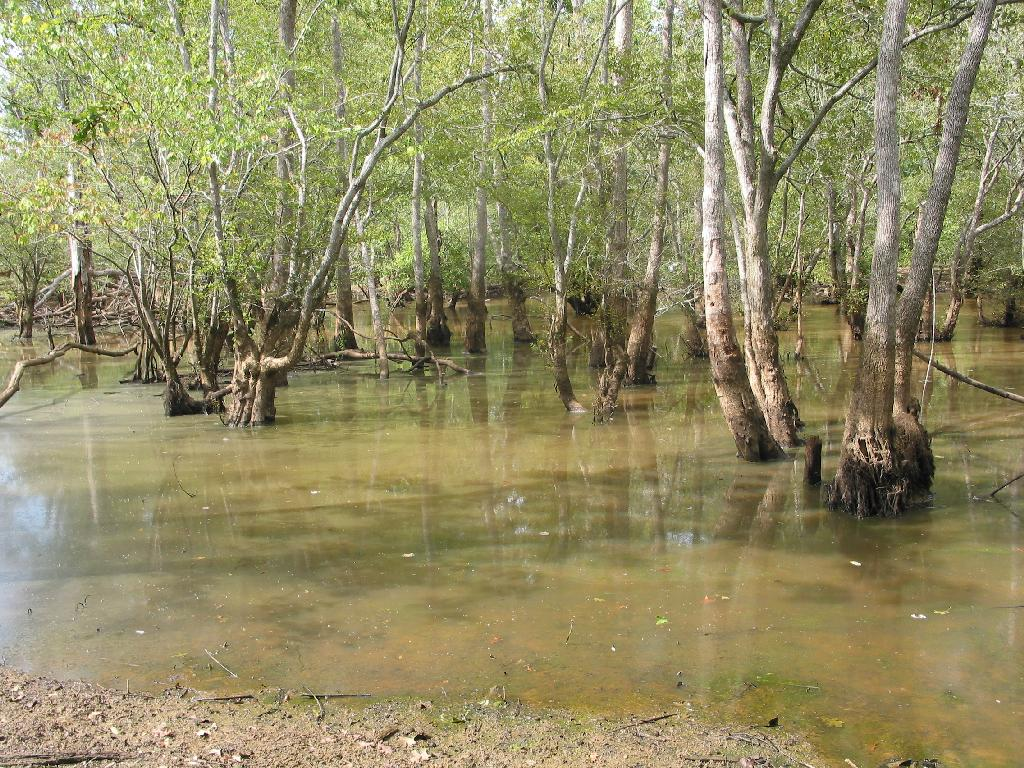 Landscape: regularly-flooded Swamp ...