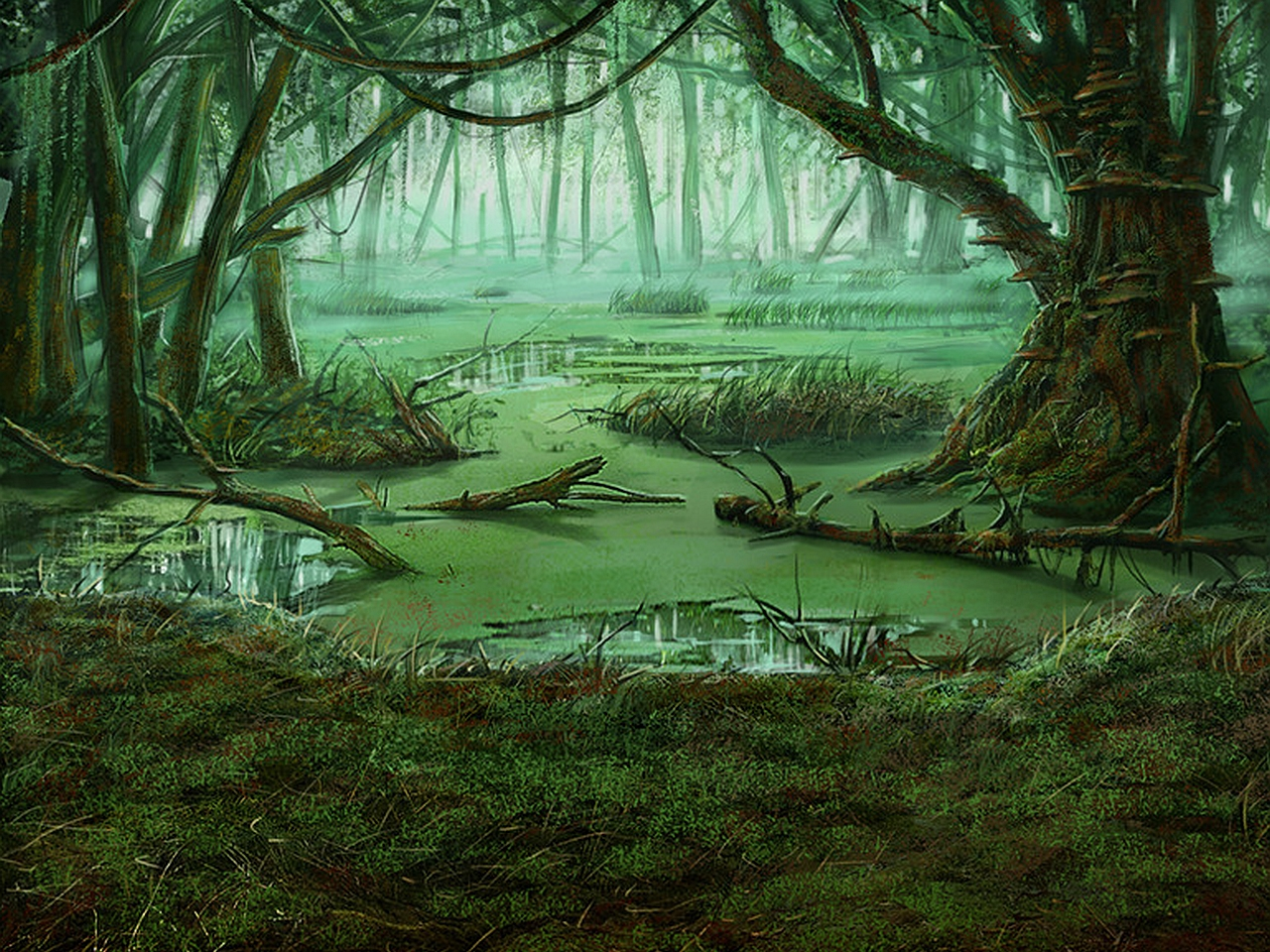 Swamp Background