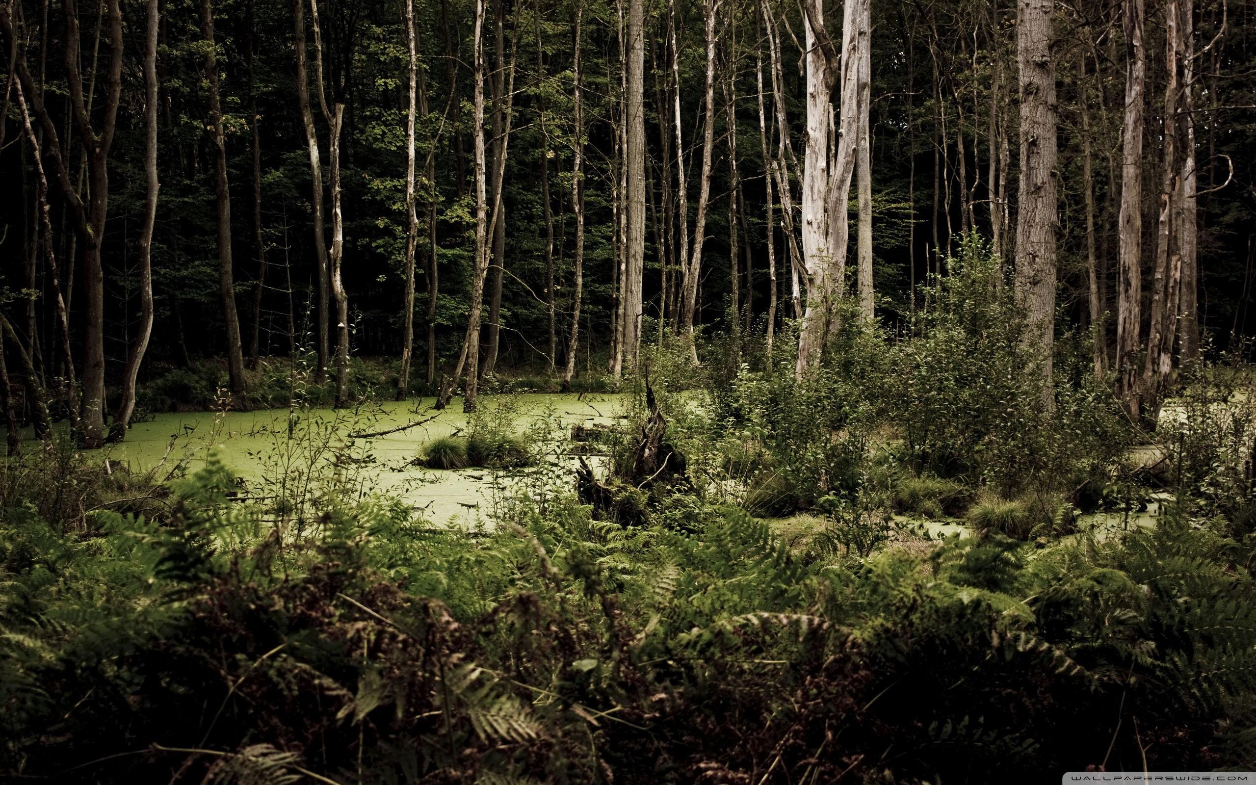 Swamp Wallpaper HD