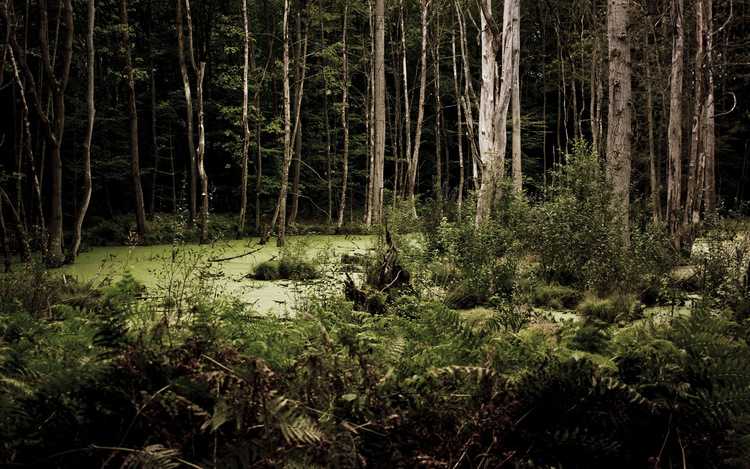 HD Wallpaper | Background ID:283298. 2560x1600 Earth Swamp