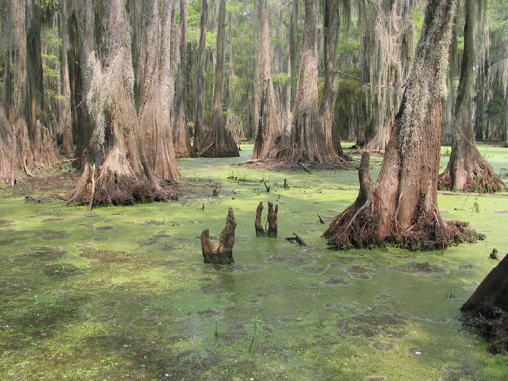 ... Landscape: Semi-permanently flooded Swamp ...