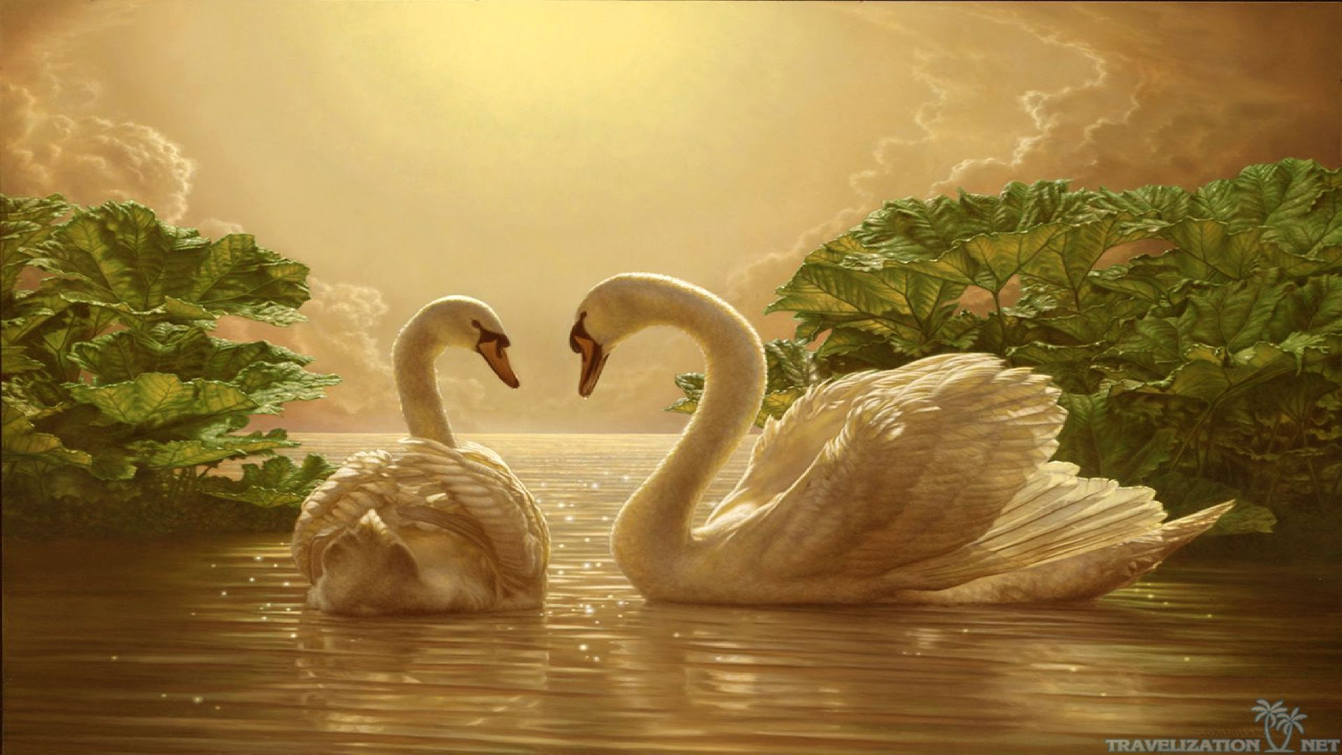 Beautiful Love Swan Desktop Wallpaper