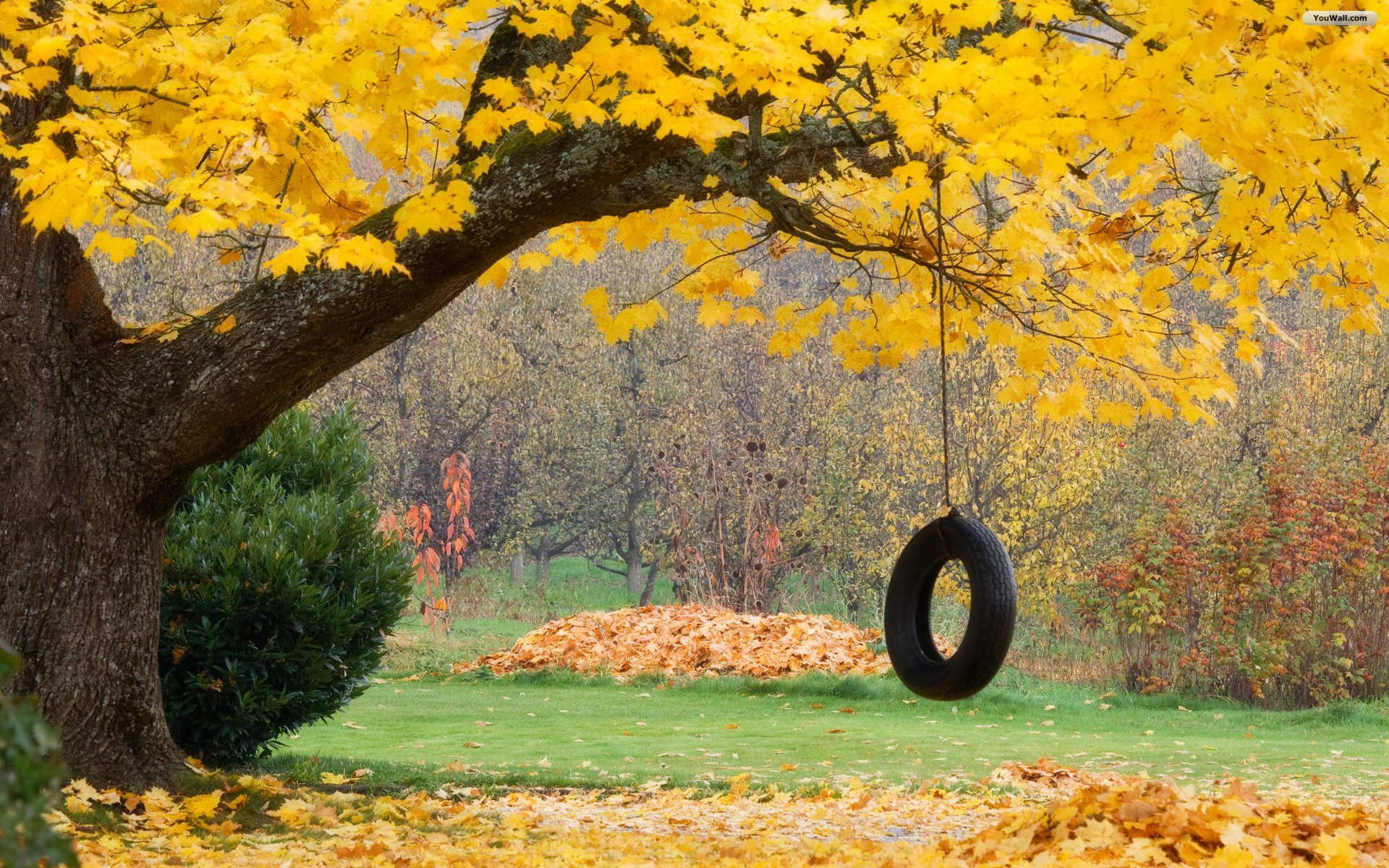 Rope Swing Wallpaper