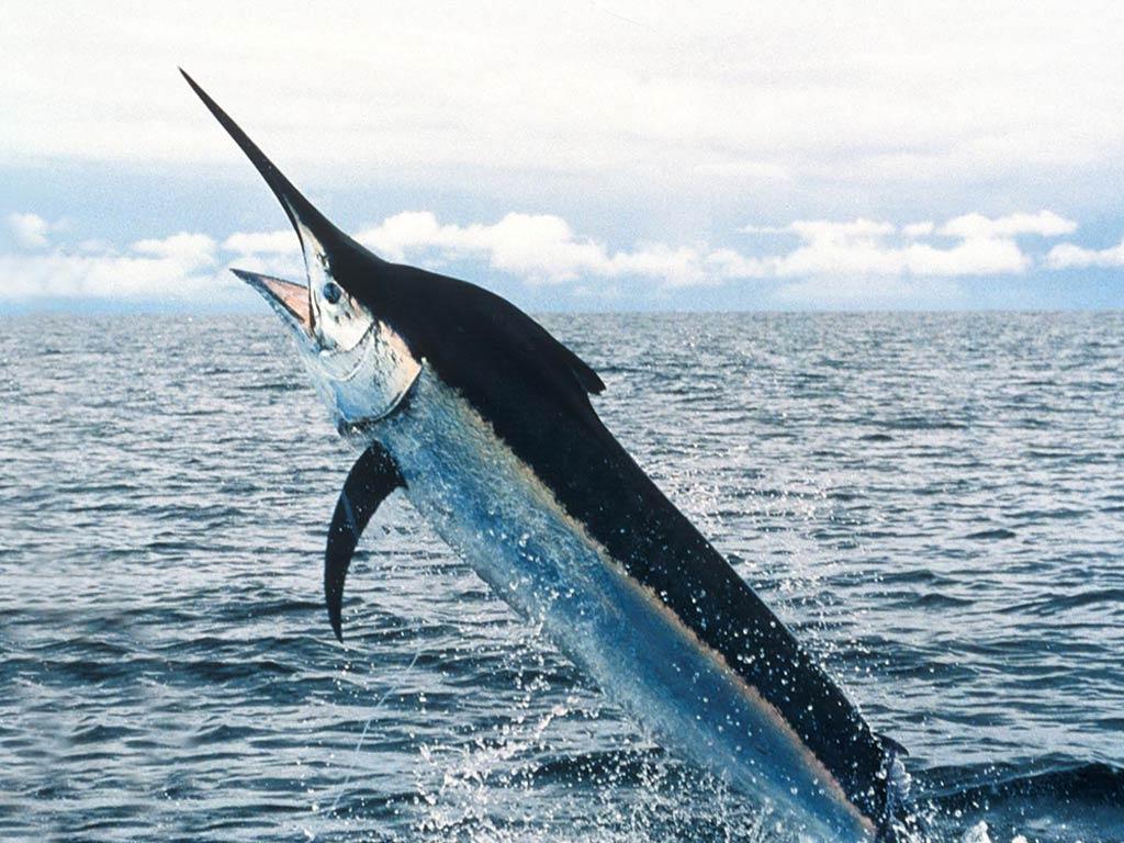 U.S. West Coast Swordfish Workshop
