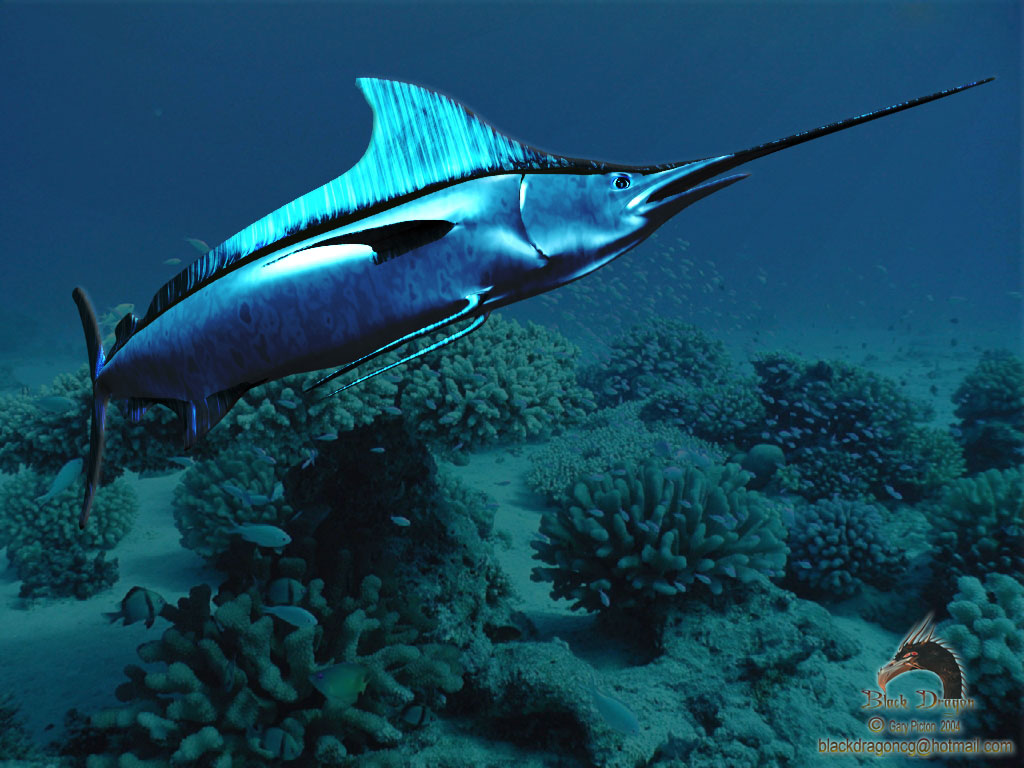 Common Name. Swordfish