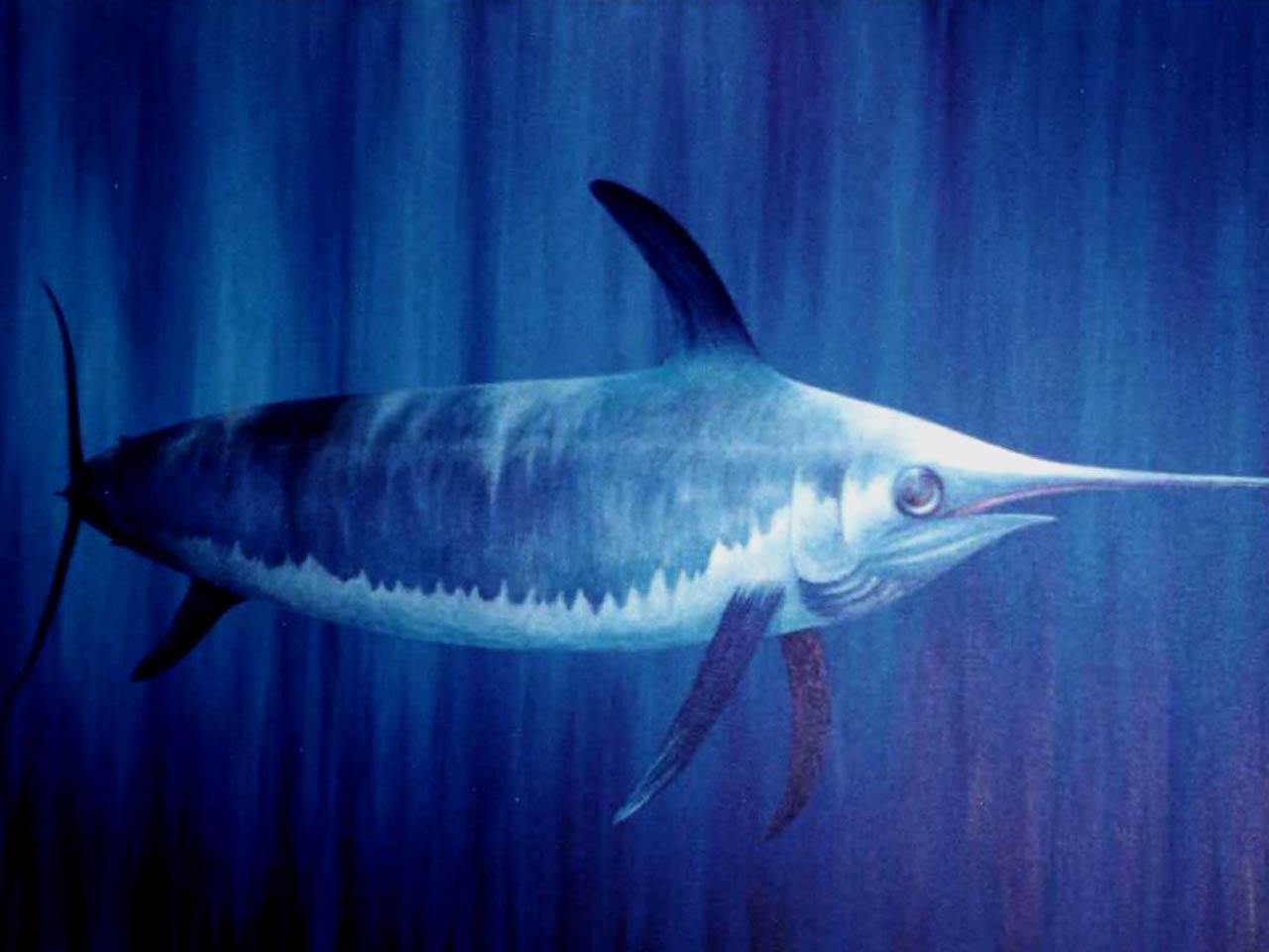 free Swordfish wallpaper wallpapers download