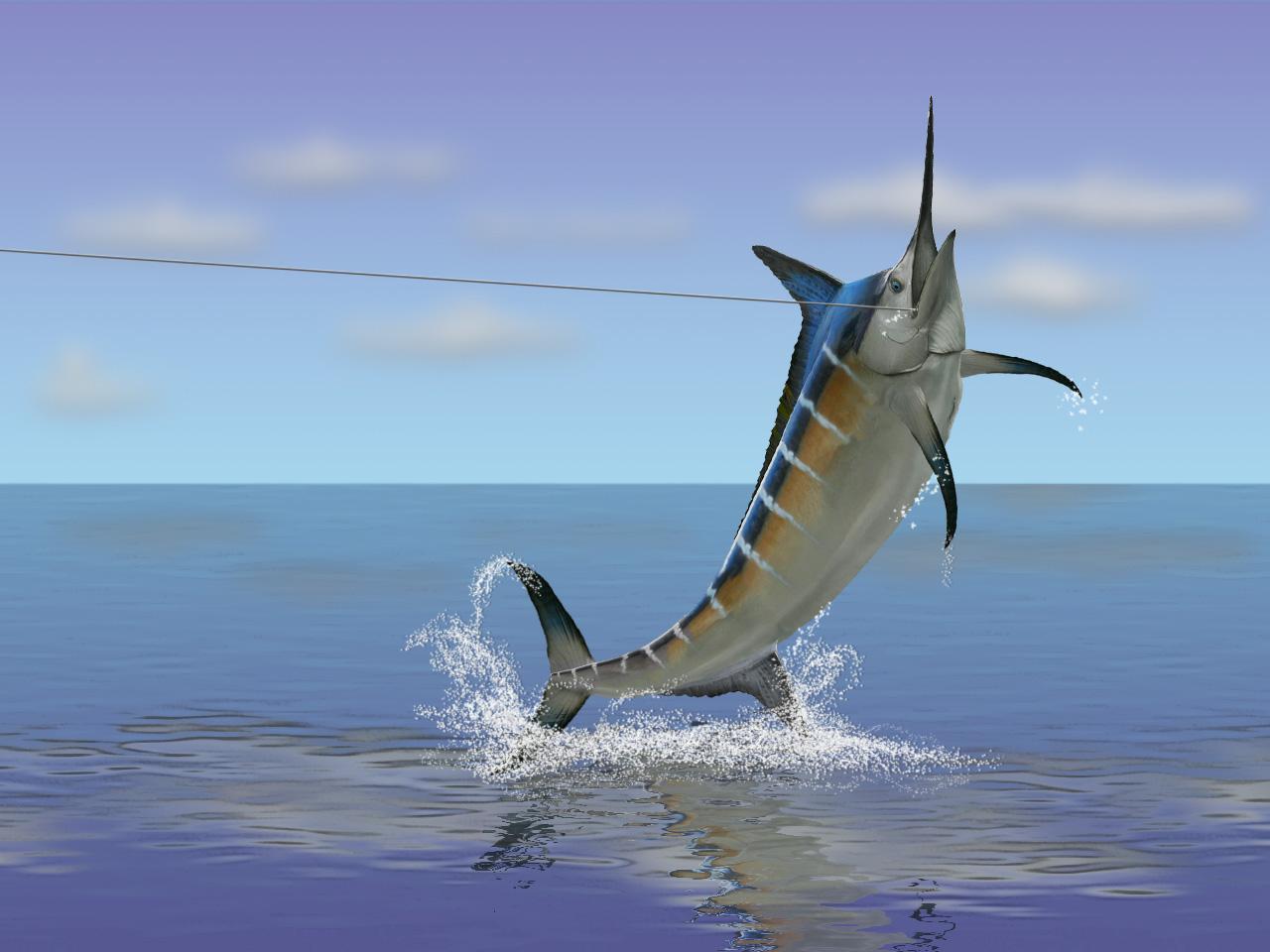 Real Swordfish update