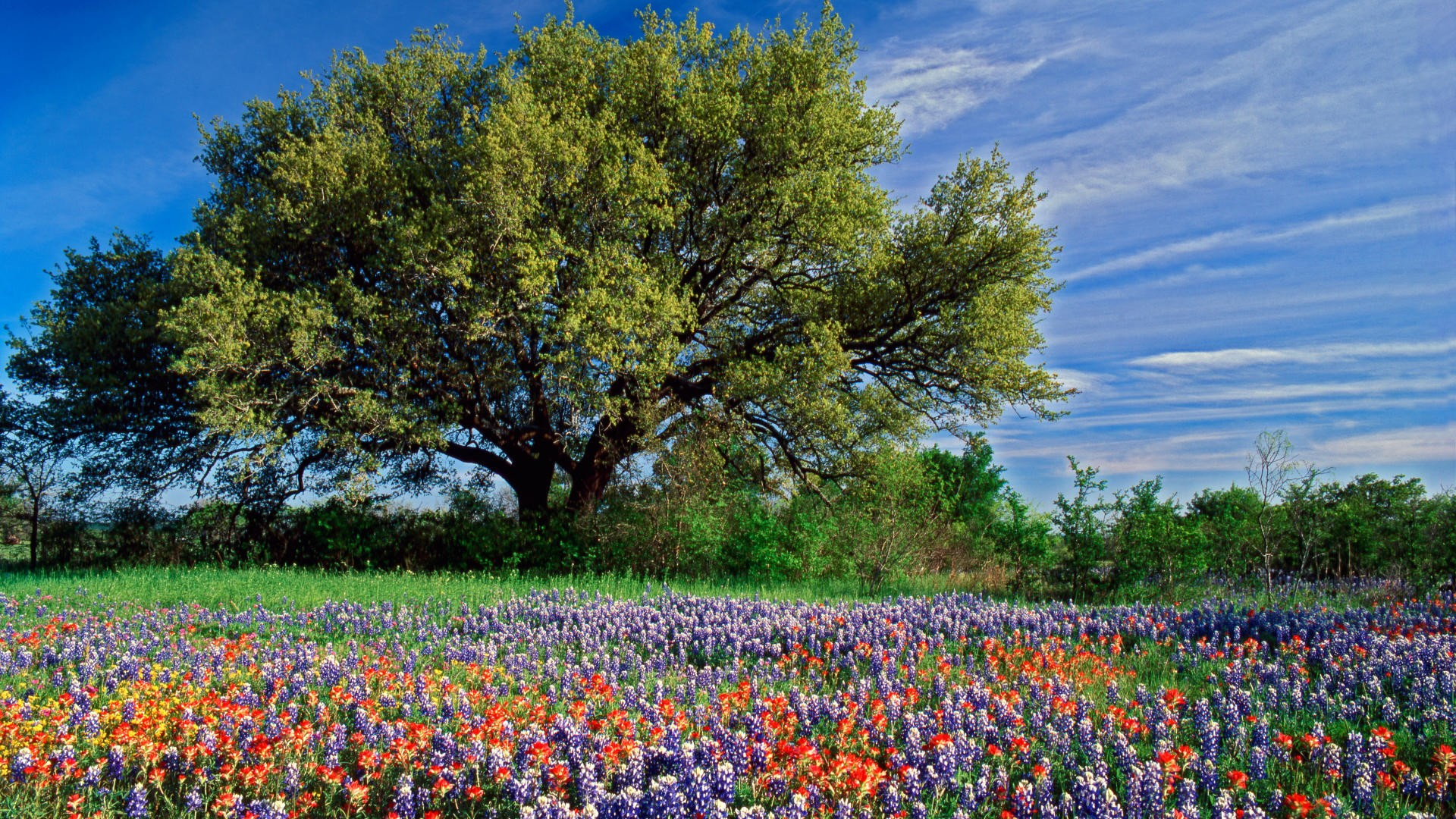 Texas Landscape Wallpaper