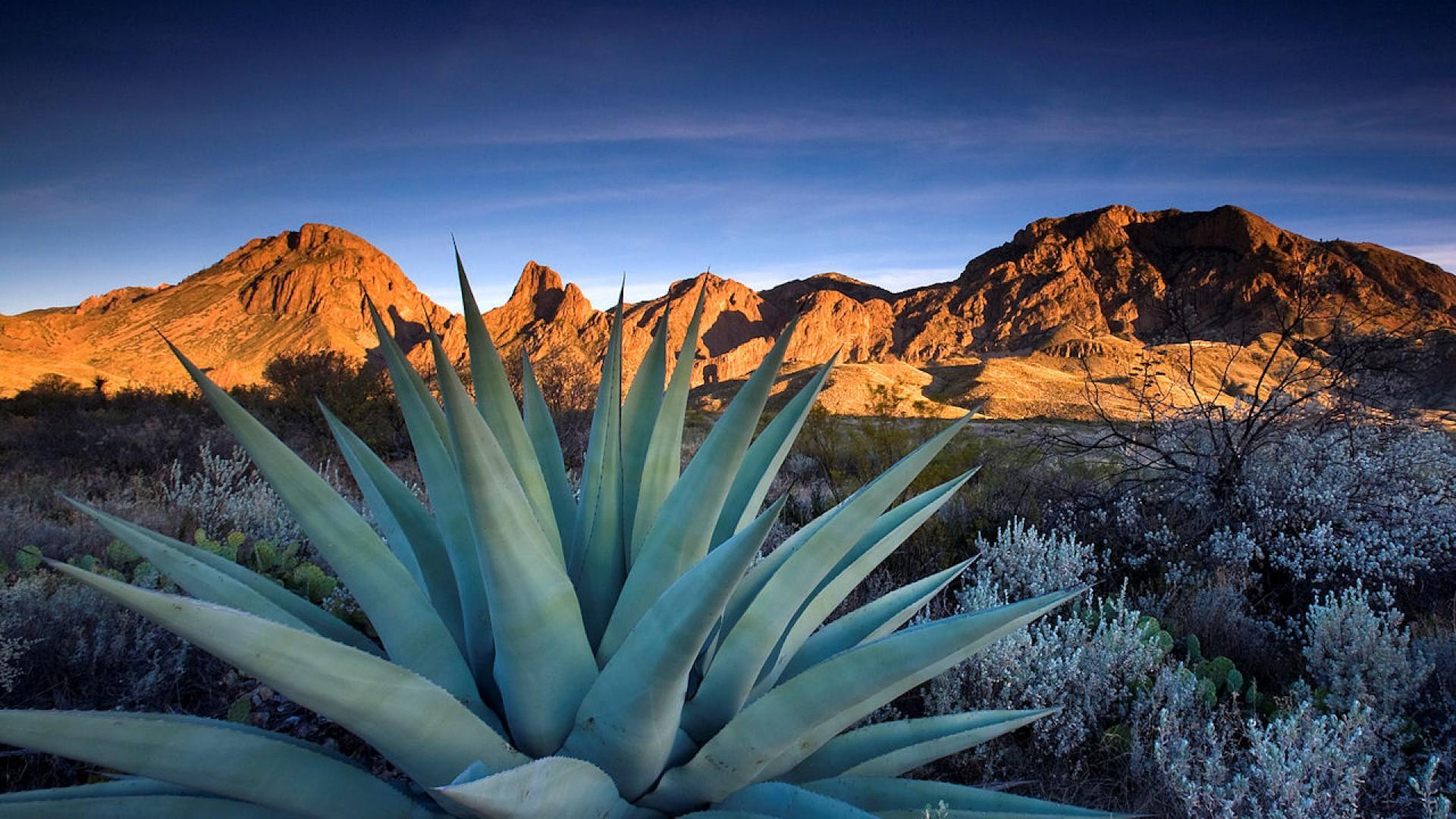 Cactus At Chisos Mountains Texas Wallpaper #24437 - Resolution 1920x1080 px