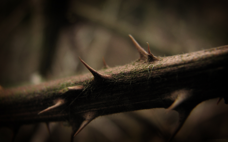 Thorns HD