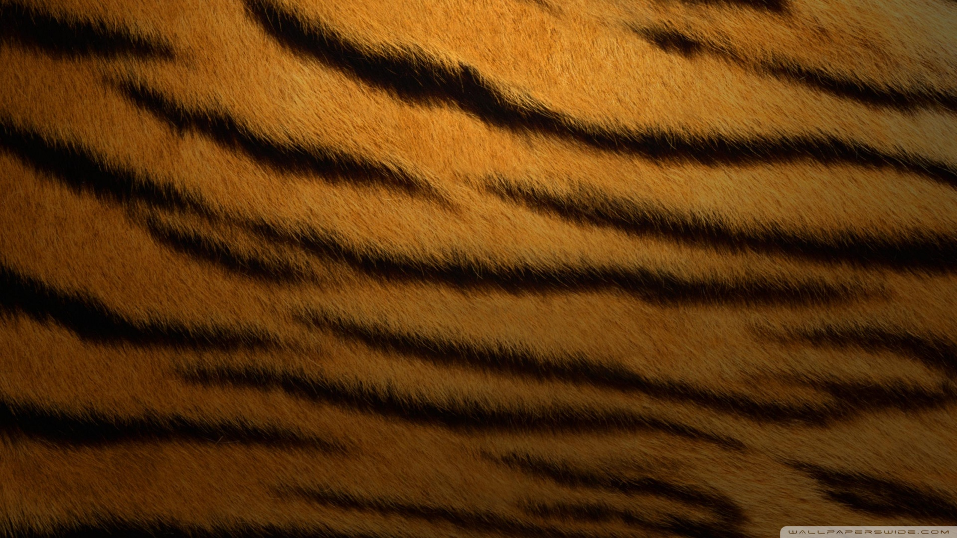 Tiger fur background