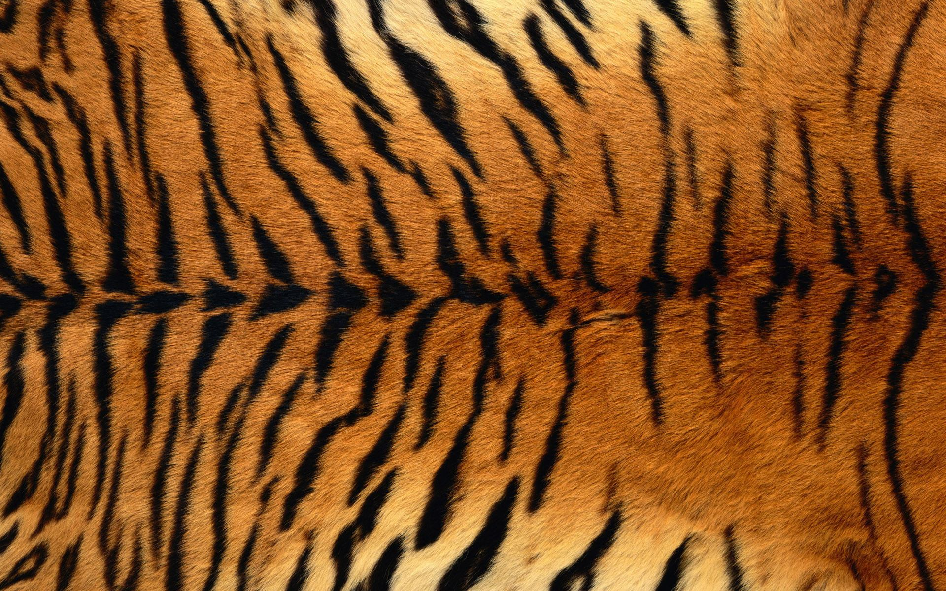 tiger body skin pattern background pctures