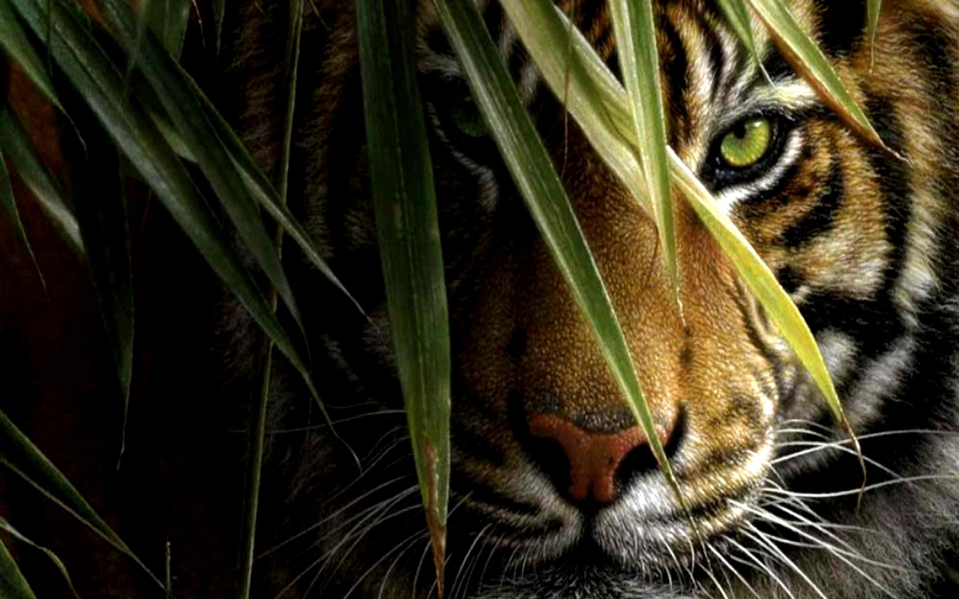 tiger-wallpaper-03.jpg ...