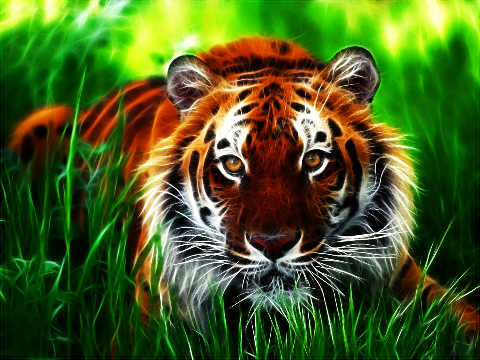 Tiger Download Wallpaper
