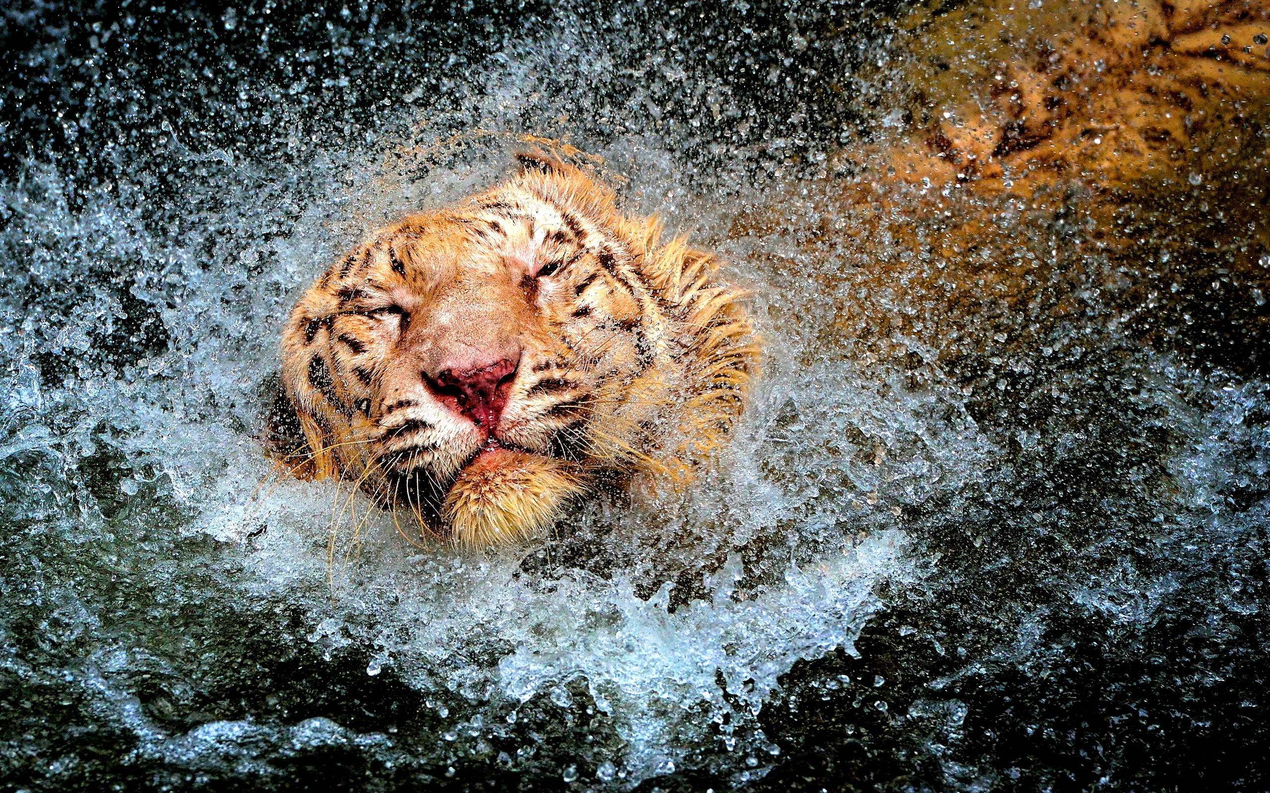 Tiger water fun