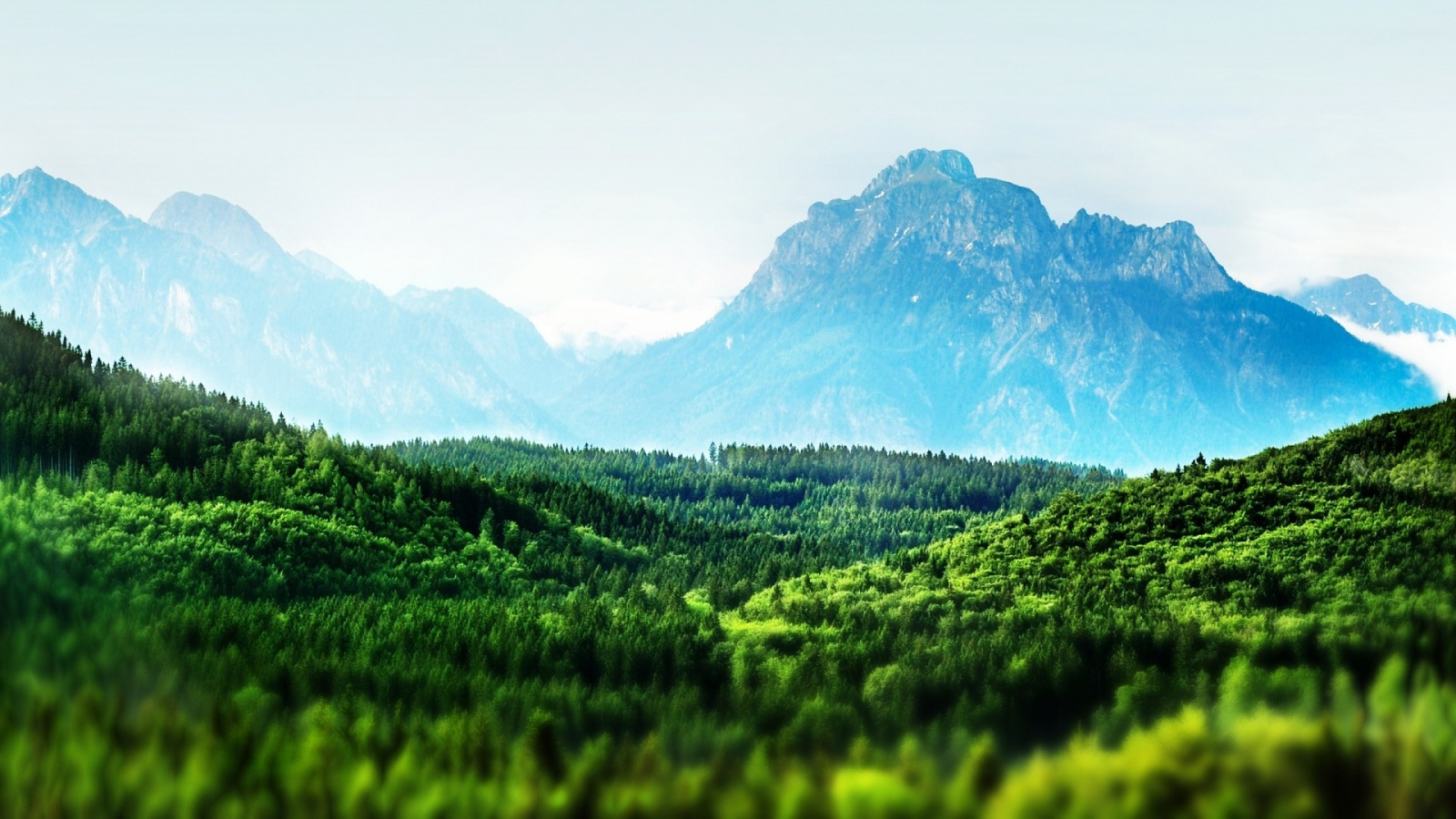 Tilt shift forest landscape