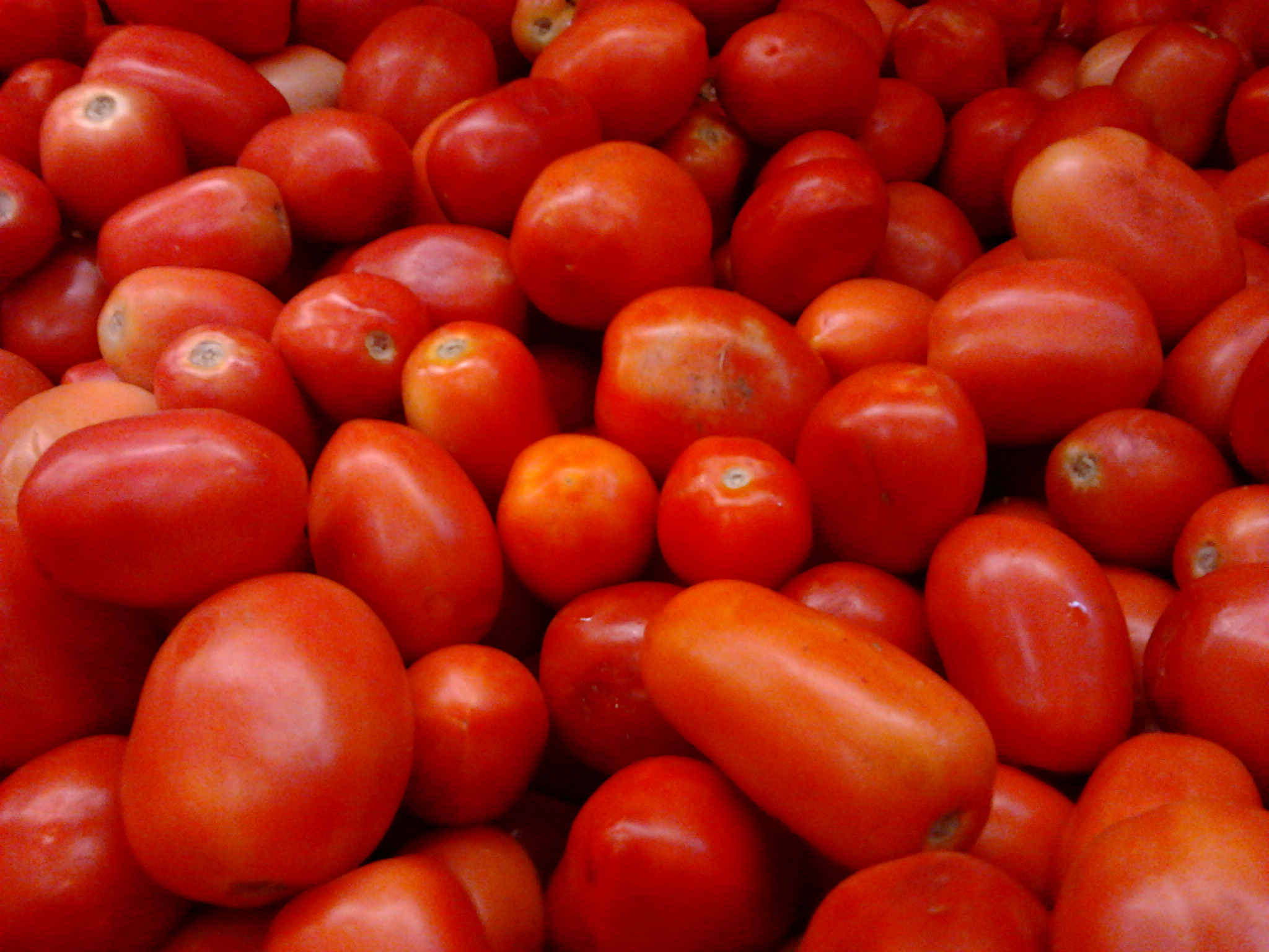 File:Roma or Bangalore Tomatoes (Indian hybrid).jpg