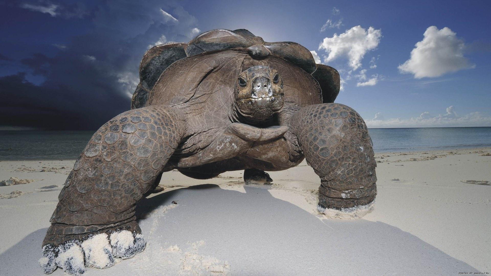 Tortoise beach