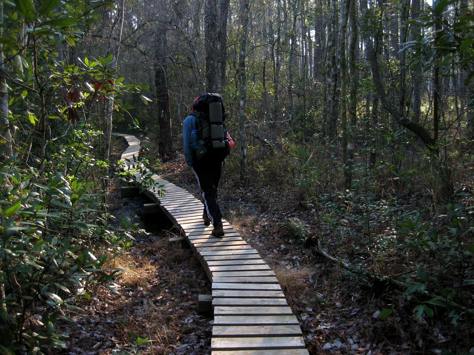 The trail section stretches from the ferry landing at Minnesott Beach to Mill Creek in the Croatan National Forest.