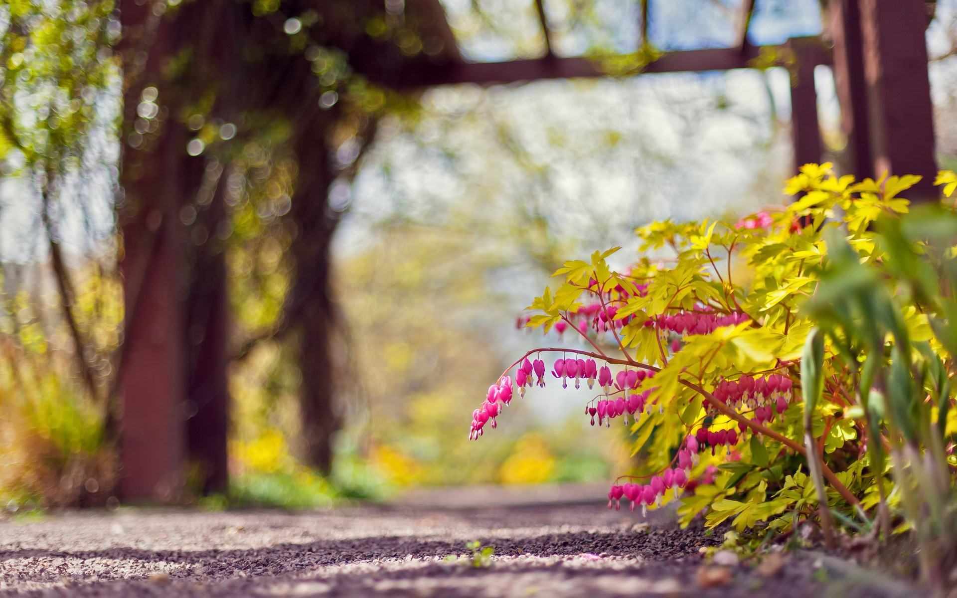 Trail Flowers Focus Nature