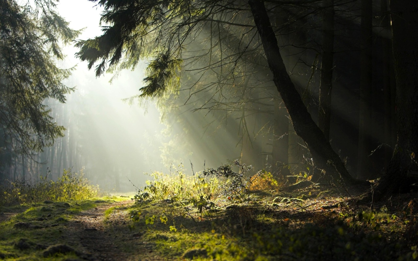Download Forest Trail Wallpaper :