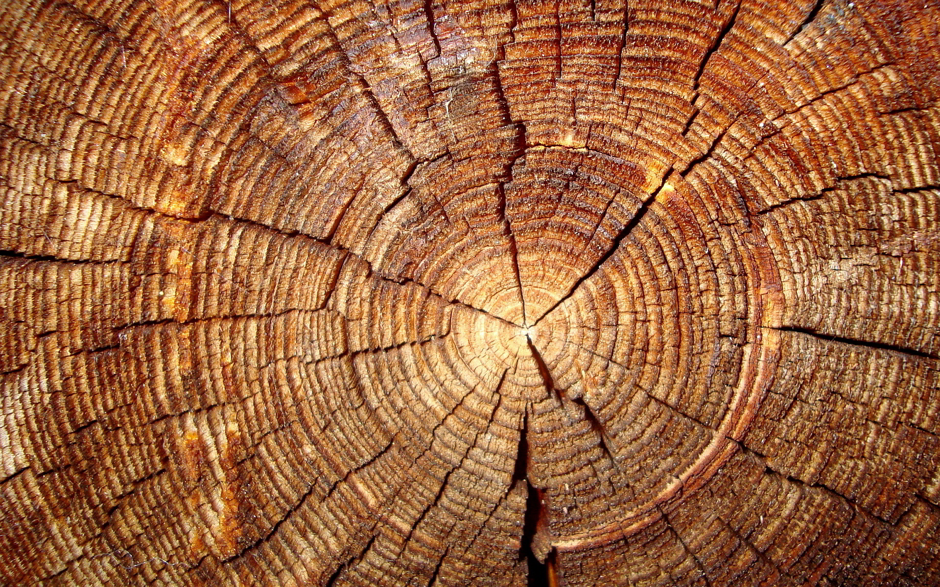 Tree annual rings