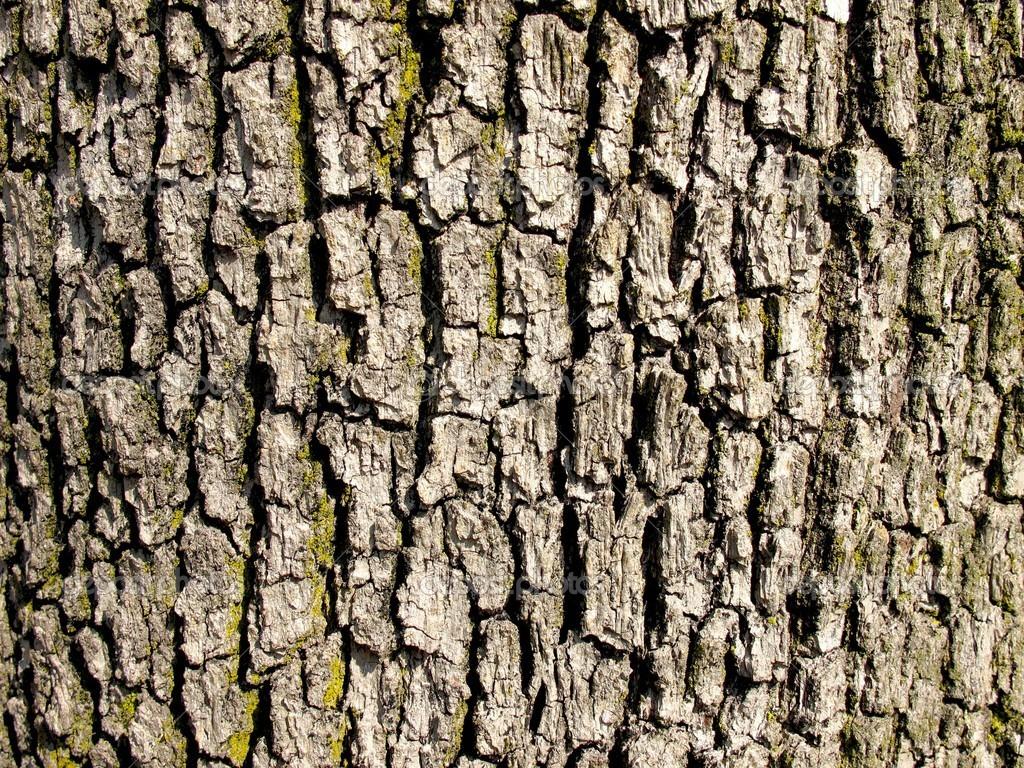 Bark of a old oak tree texture — Photo by cristalvi