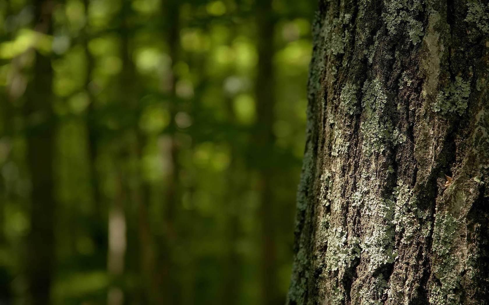 ... Tree bark 1680x1050 wallpaper ...