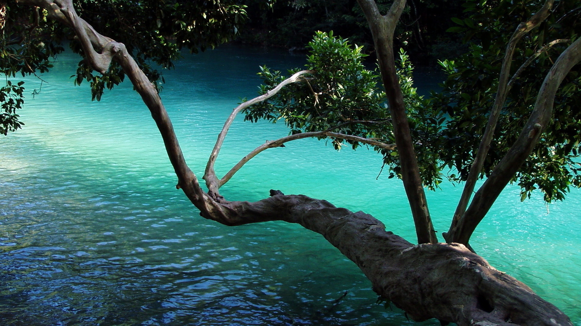 Tree branch over water