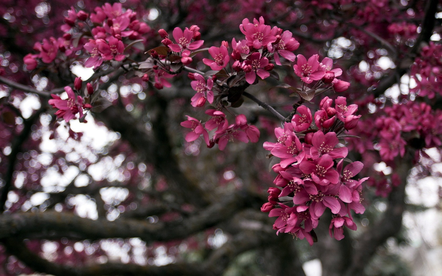 Tree Branches Flowers Nature