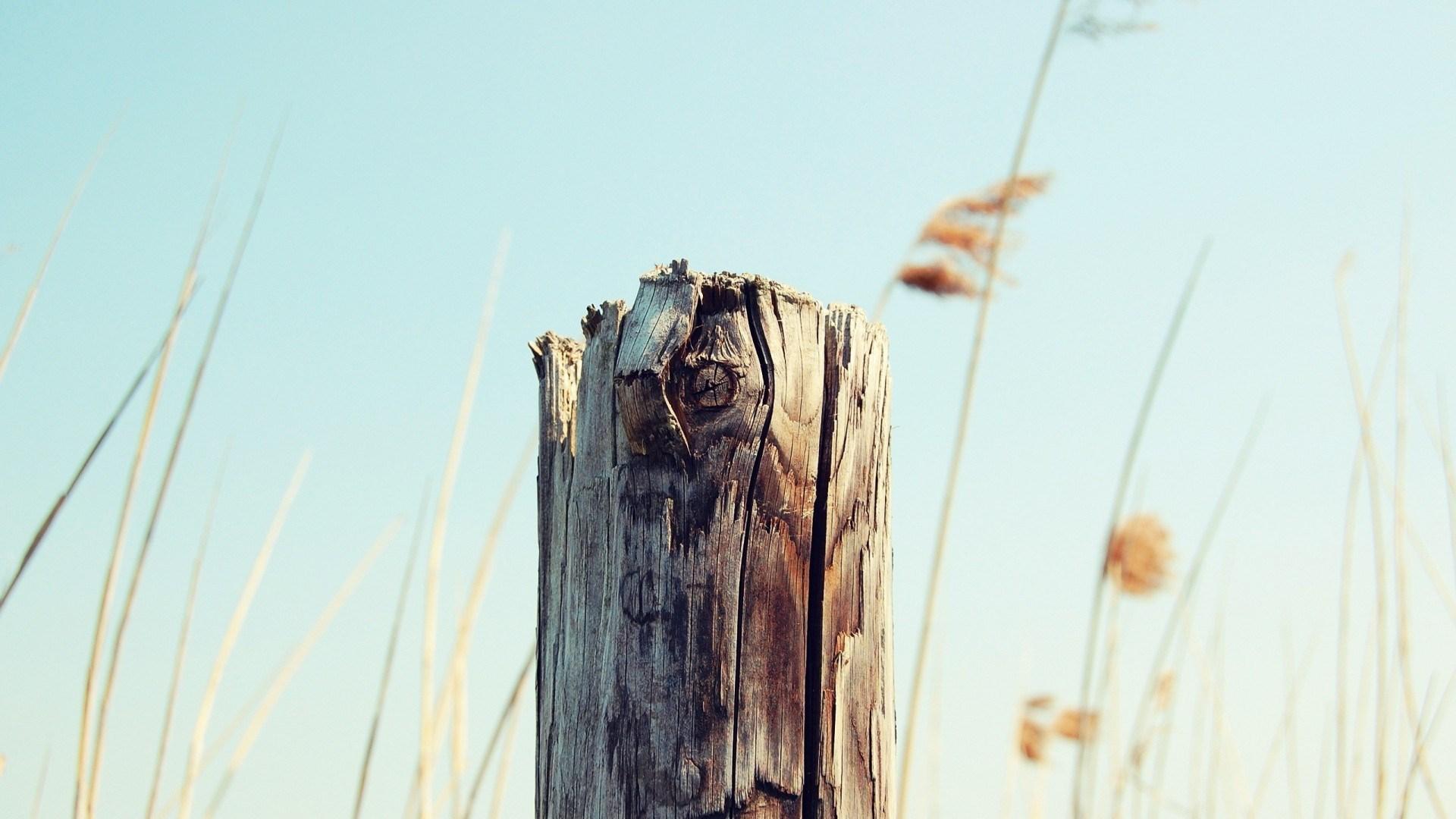 Tree Stump Nature