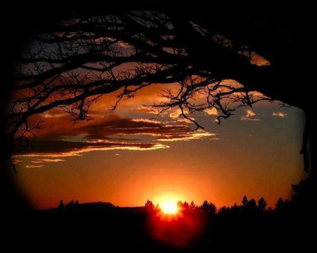Wallpaper Tags: trees evening nature dark sunset