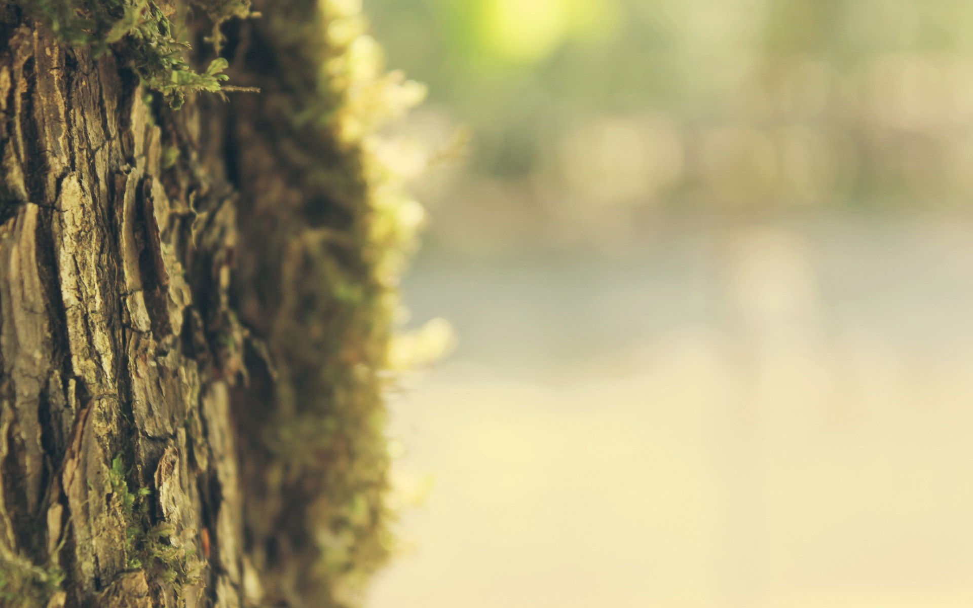 Nature Bark Tree Trunk Bokeh HD Wallpaper