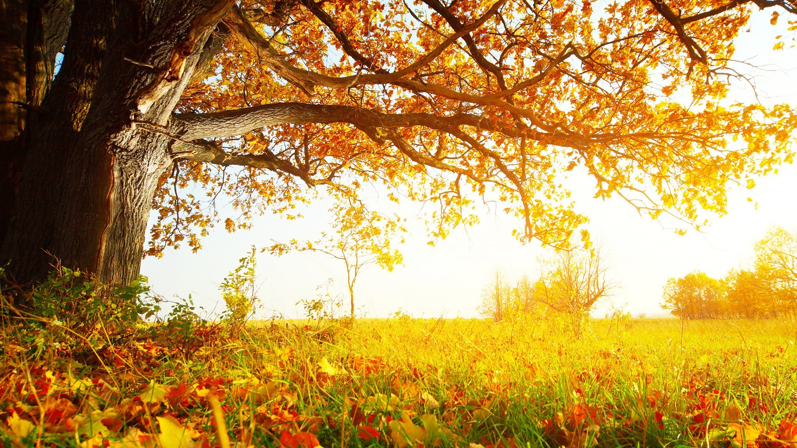 tree wallpaper 9 Desktop Wallpapers