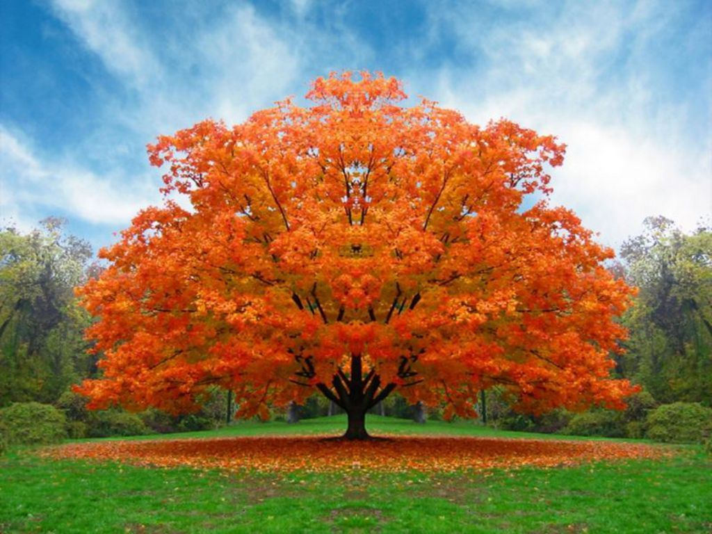 Appealing Colorful Tree Wallpaper 1024x768px