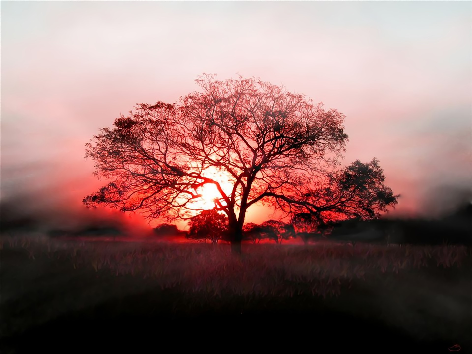 Wallpaper Red Tree