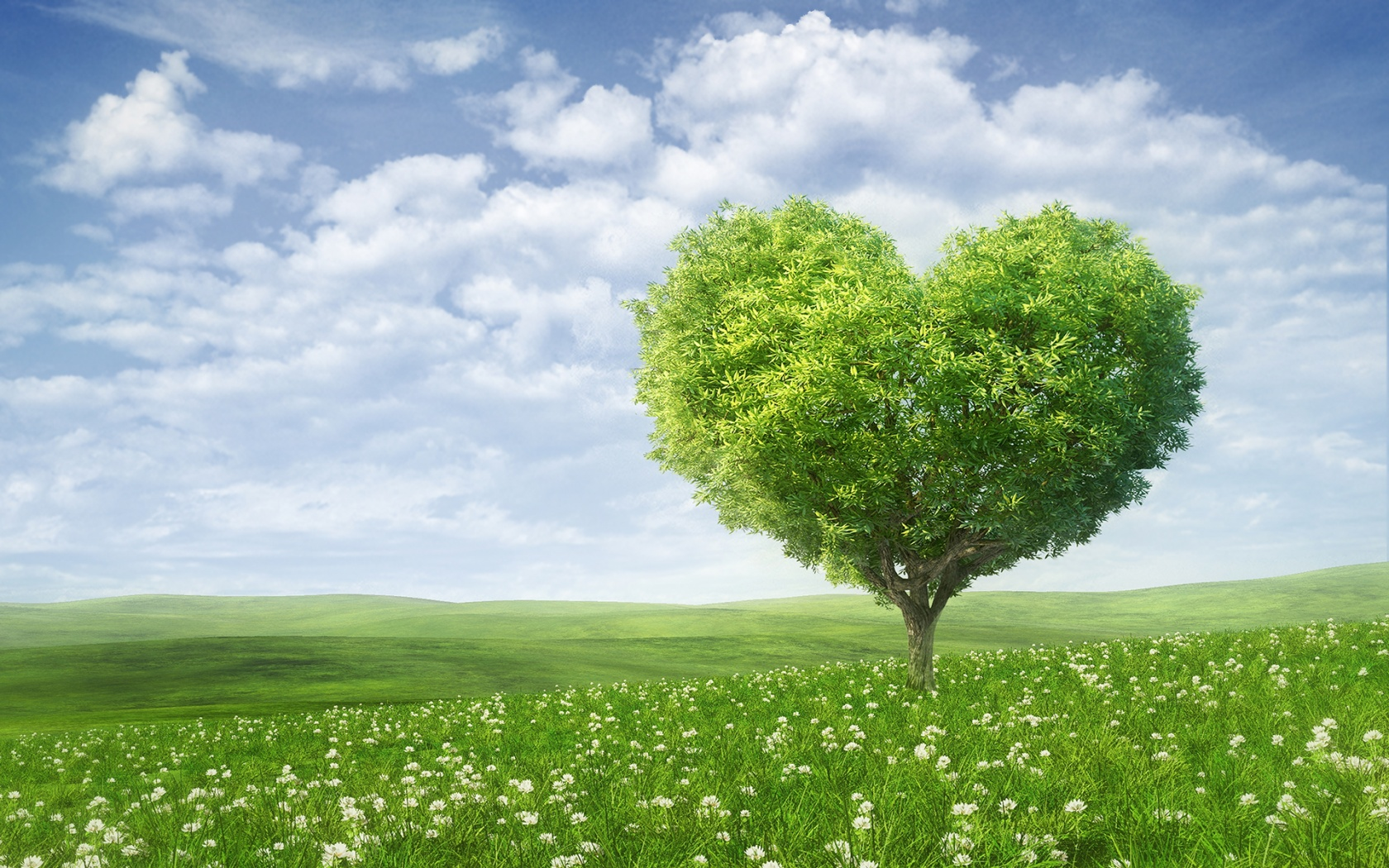 Description: The Wallpaper above is Summer heart tree Wallpaper in Resolution 1680x1050. Choose your Resolution and Download Summer heart tree Wallpaper