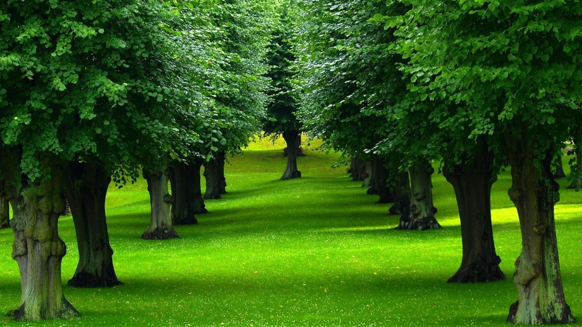 Trees Background
