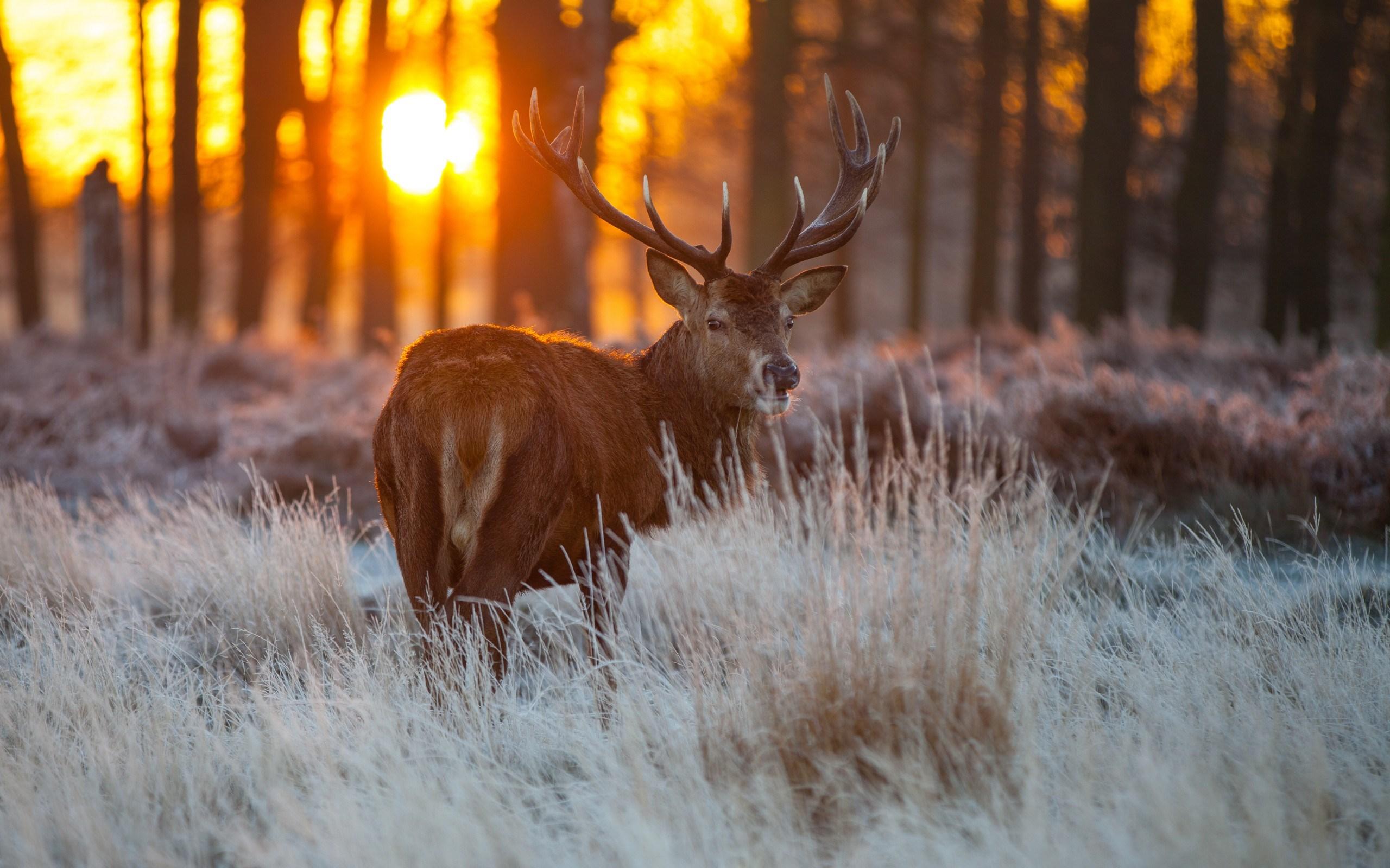 Trees Deer Look The Sun Nature