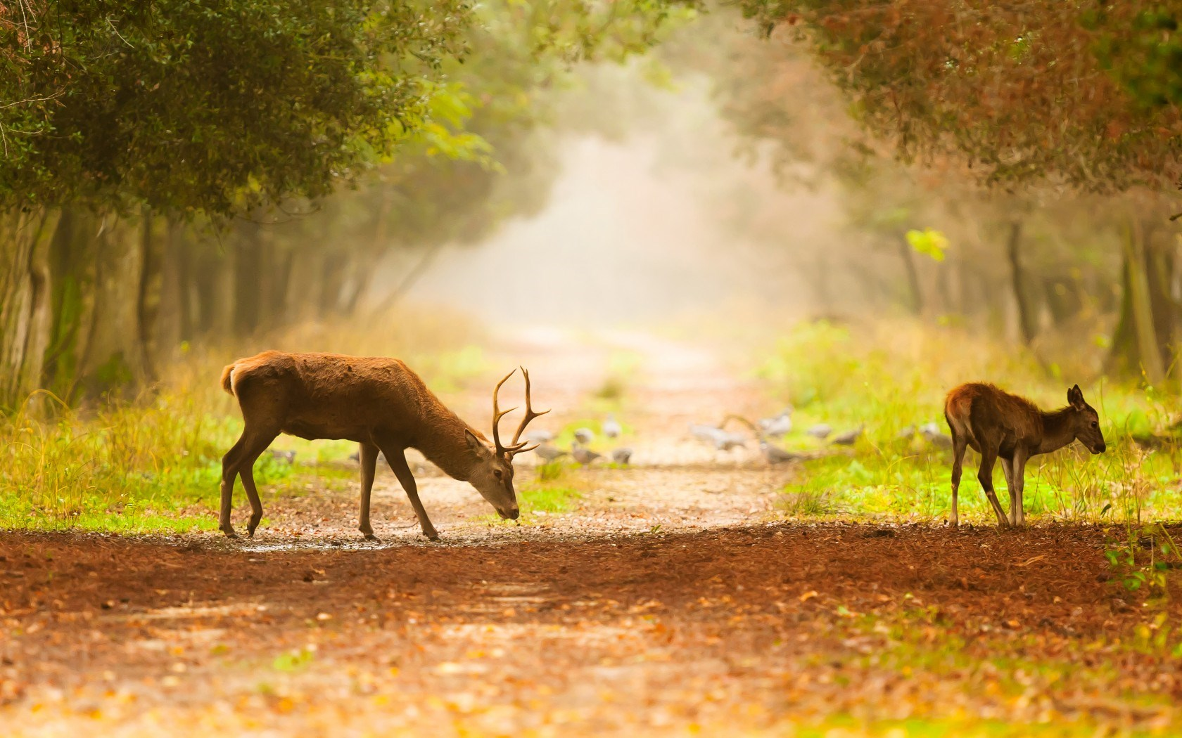 Trees Footpath Deer Birds Fog Nature